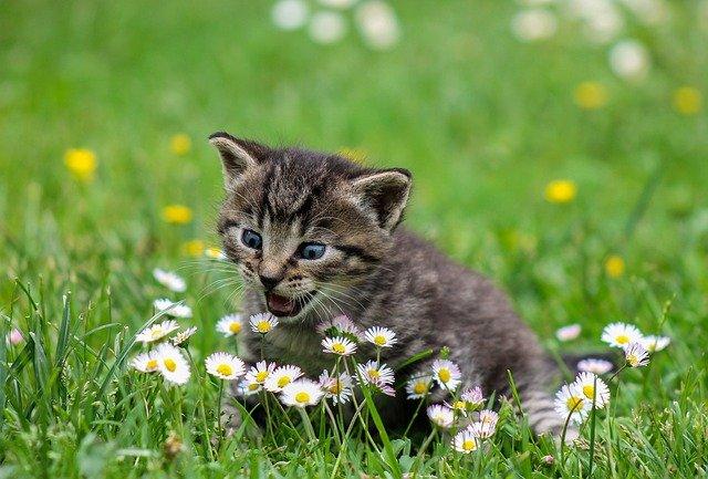 kotě a sedmikrásky