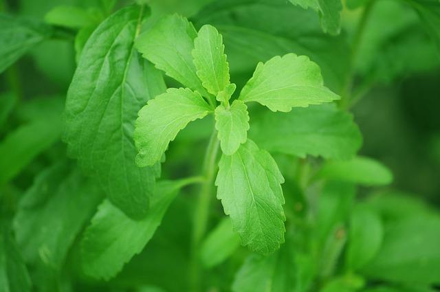 sladká rostlina.jpg